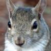 Doom-the-Squirrel's avatar