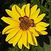 dpdesautels's avatar