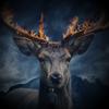 Drachiss's avatar