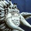 DracorisTan's avatar