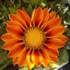dragon-flower1567's avatar