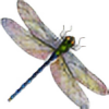 dragon-fly-to-me's avatar