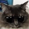 dragonqueenthe1st's avatar