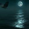 drakmar's avatar