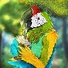 Draunaan's avatar