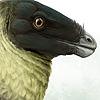DrawingDinosaurs's avatar