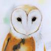 DrawingSongbird's avatar