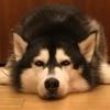 DreamWolfFiadh's avatar