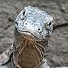 driscoldevil's avatar