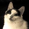 Drunken-Cat's avatar