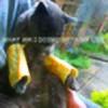 dtjkk2's avatar