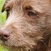 dustysparkledawnyt's avatar