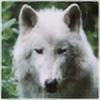 Dutch-Wolf's avatar