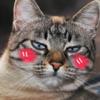 DzikiBadyl's avatar