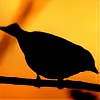 Early-Birdie's avatar