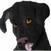 Ebineyflower's avatar
