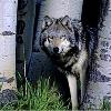 edsheeranlover29's avatar