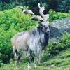 eesaghaffar's avatar