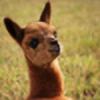 eightdollarwater's avatar