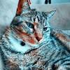 EkatsiaEli's avatar