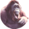 Elacee's avatar