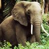 ElephantEmpress's avatar