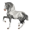 ElkRidgeStables's avatar