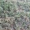 elue1234's avatar