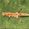 Emers480's avatar