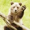 Emi-Bear's avatar