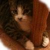 Emiello's avatar
