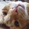 Emogamer12's avatar