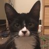 EnbyFaeKat's avatar