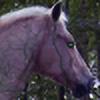 enderfjord's avatar