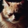 EpicCatFace's avatar