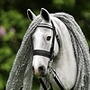 Eponi-hobbyhorses's avatar