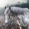 Equide--Designs's avatar