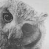 Erdbeeere's avatar