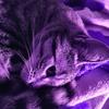 ErROr267's avatar