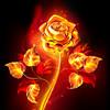Eternal-Fire-Rose's avatar