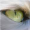 EumyCookie's avatar