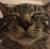 evell505's avatar