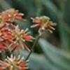 Everweiss's avatar