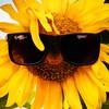 evgen-de's avatar