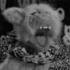 EvilCatApparition's avatar