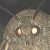 EvilDemonKitty's avatar