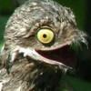 evilshaheen's avatar