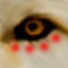 Evkav's avatar
