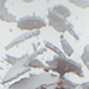 evuki's avatar