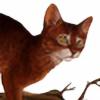Exagone's avatar